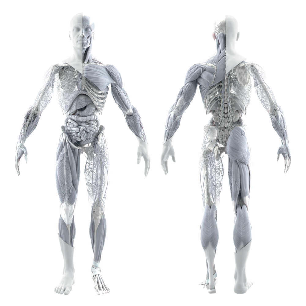 Human body render by Angels & Demons